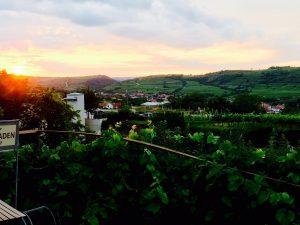 Blick zurück auf die schöne Landschaft rund um Langenlois